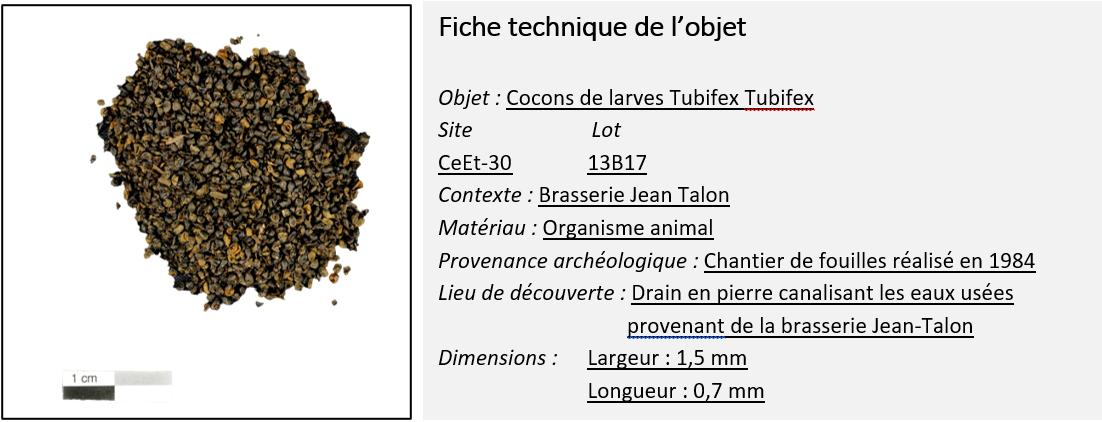 3.Tubifex